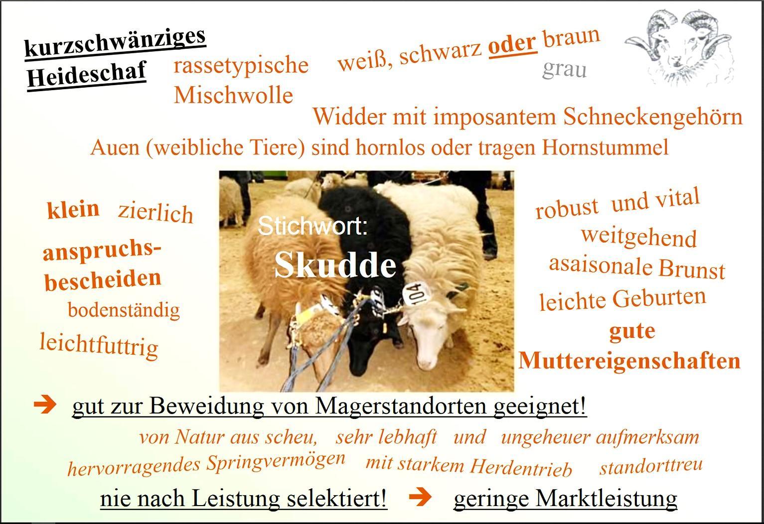 Christoph Behling Stichwort Skudde