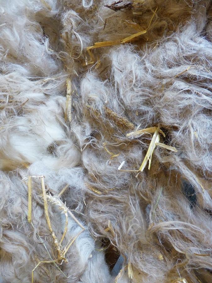 Einstreu in der Wolle
