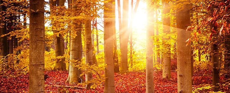 Herbst Programm