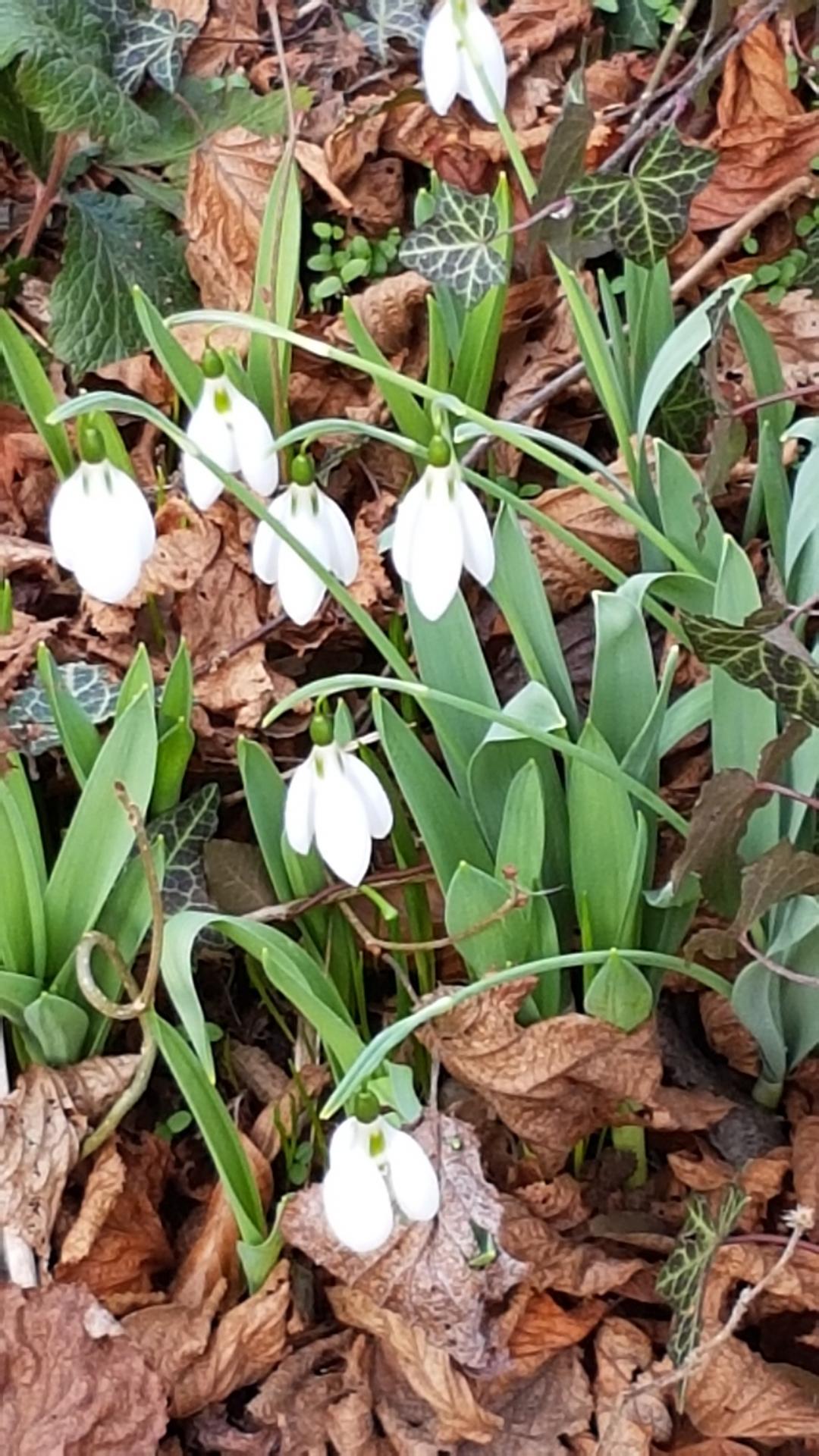des Einhorns Weißer Garten Frühling