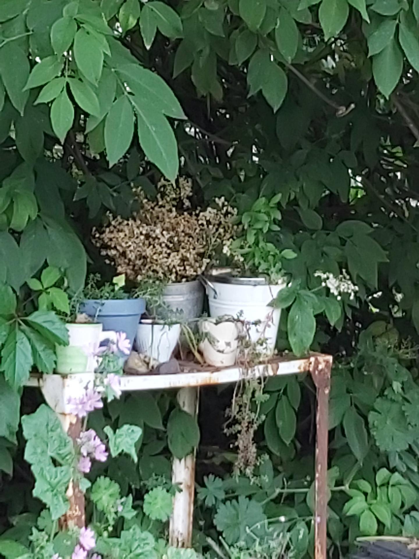 Gartenspaziergänge