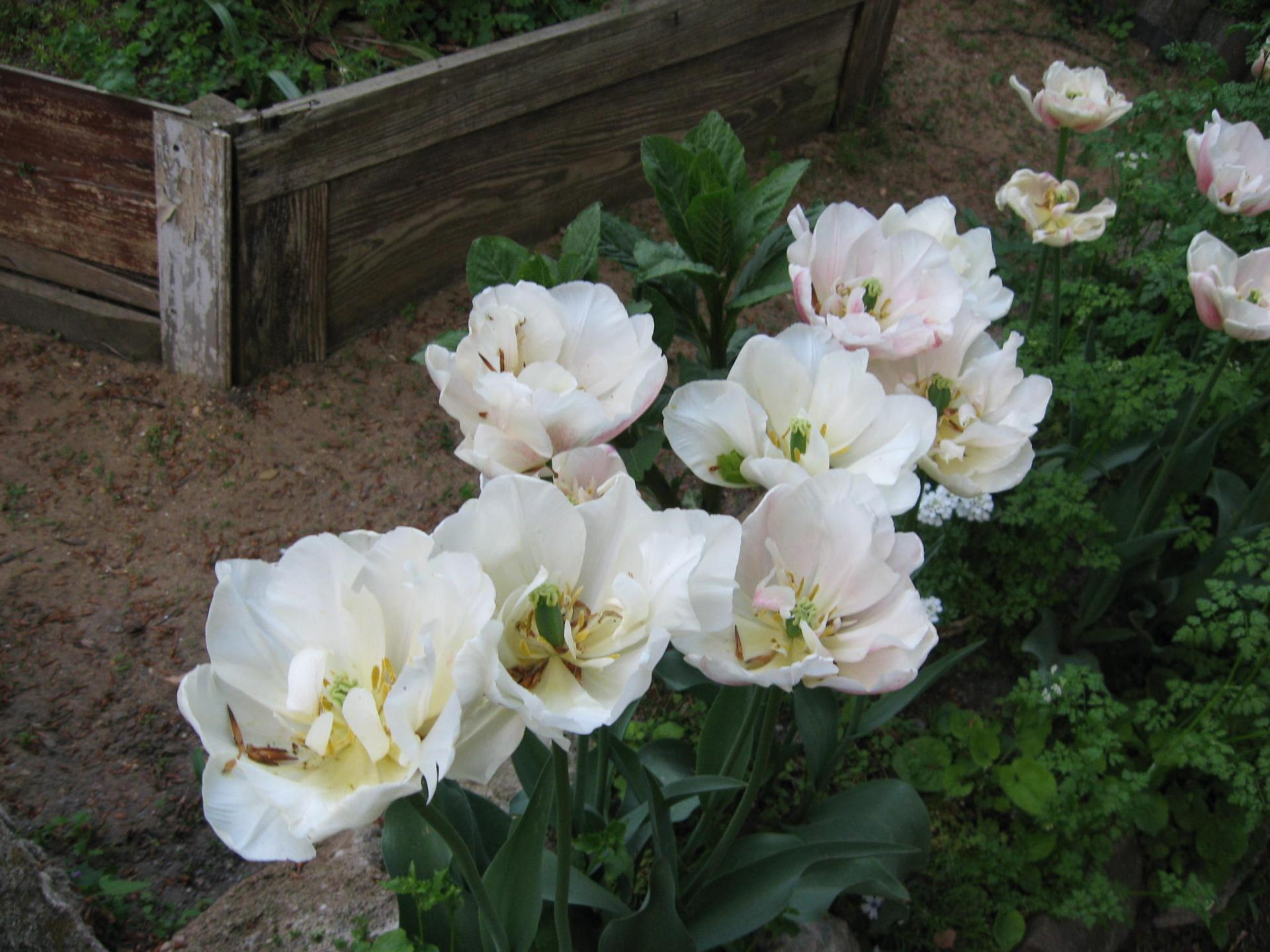 Des Einhorns Weißer Garten