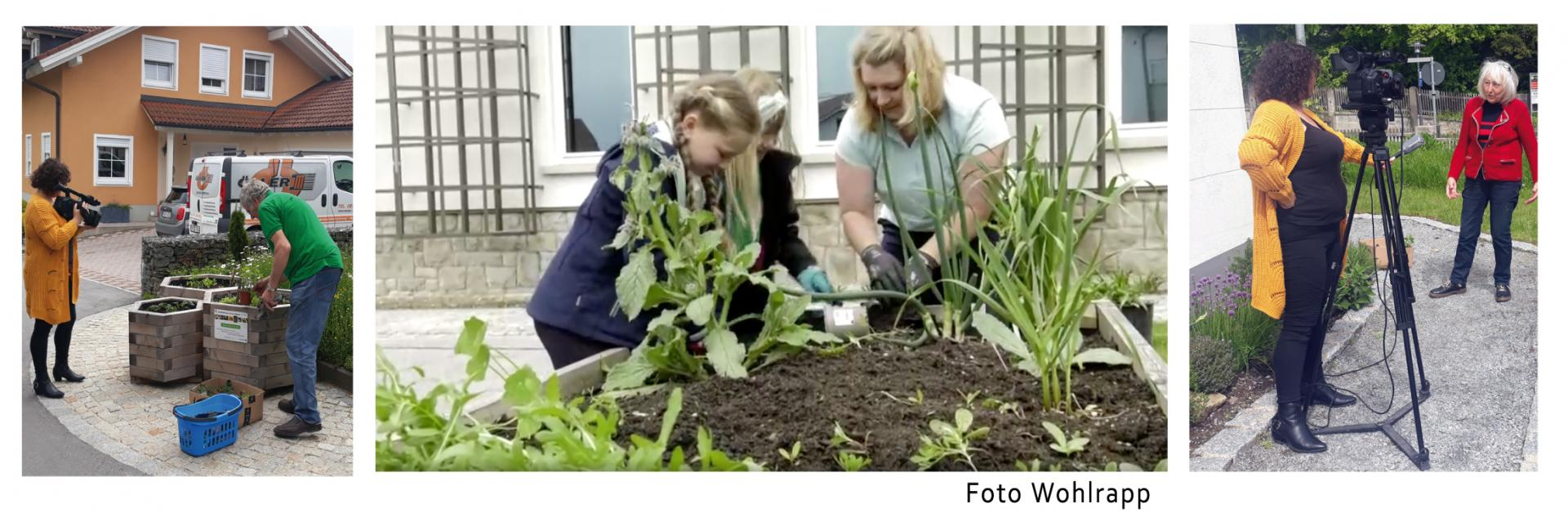 bepflanzen-beete_07-2021