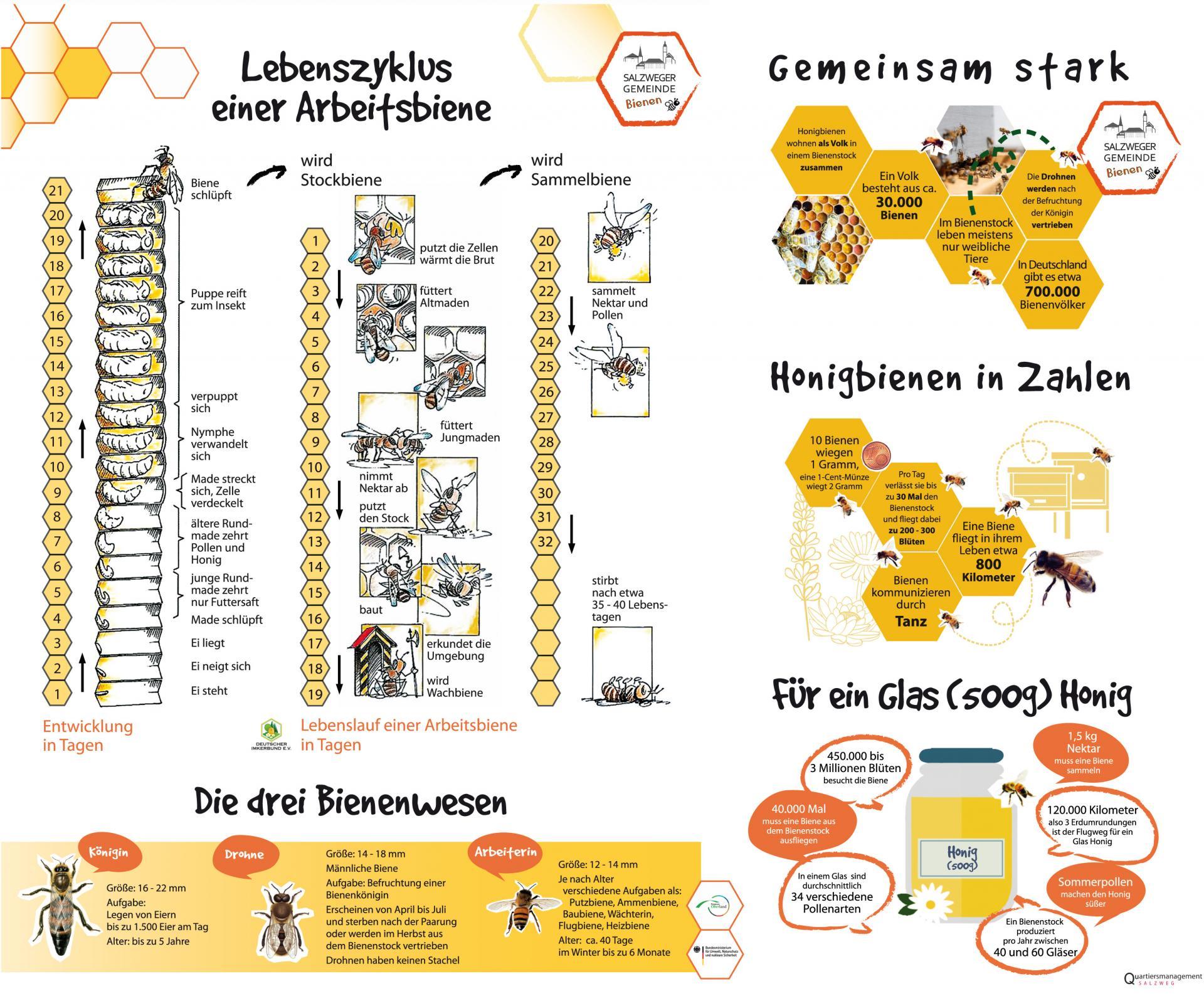 infotafeln-bienen_09-2021