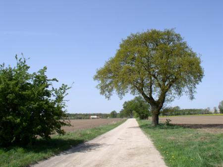 Viesecke-Kletzke