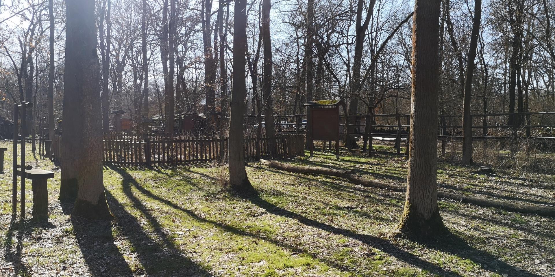 Schatten der Bäume in der Frühlingssonne