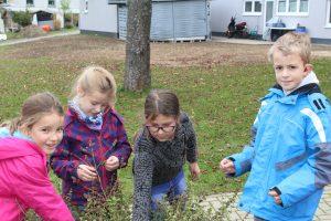Eindrücke aus der AG Schulgarten
