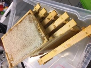 Nicht entdeckelte Waben mit Honig