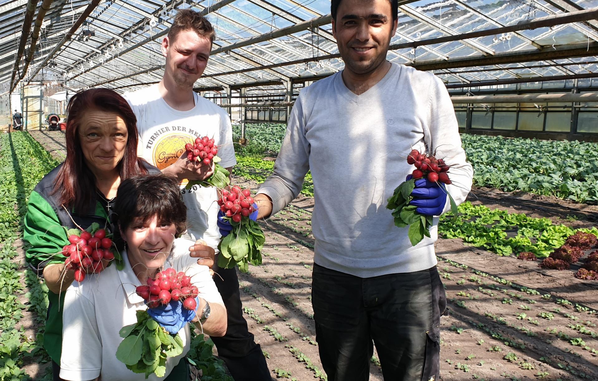 Mitarbeiter aus Fleißdorf präsentieren stolz die ersten Radieschen