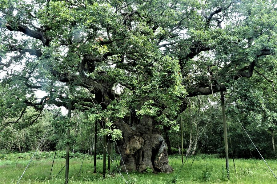 love around the world_England_Sherwood Forest_Bild von David Reed auf Pixabay