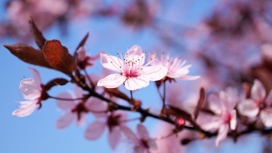 love around the world_Japan_Kawasaki_Bild von Andreas Lischka auf Pixabay