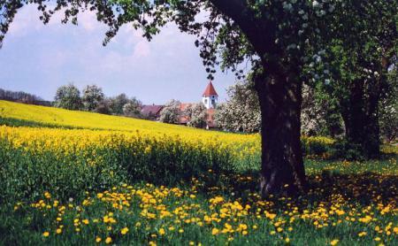 Vorstellung Herdwangen im Frühling