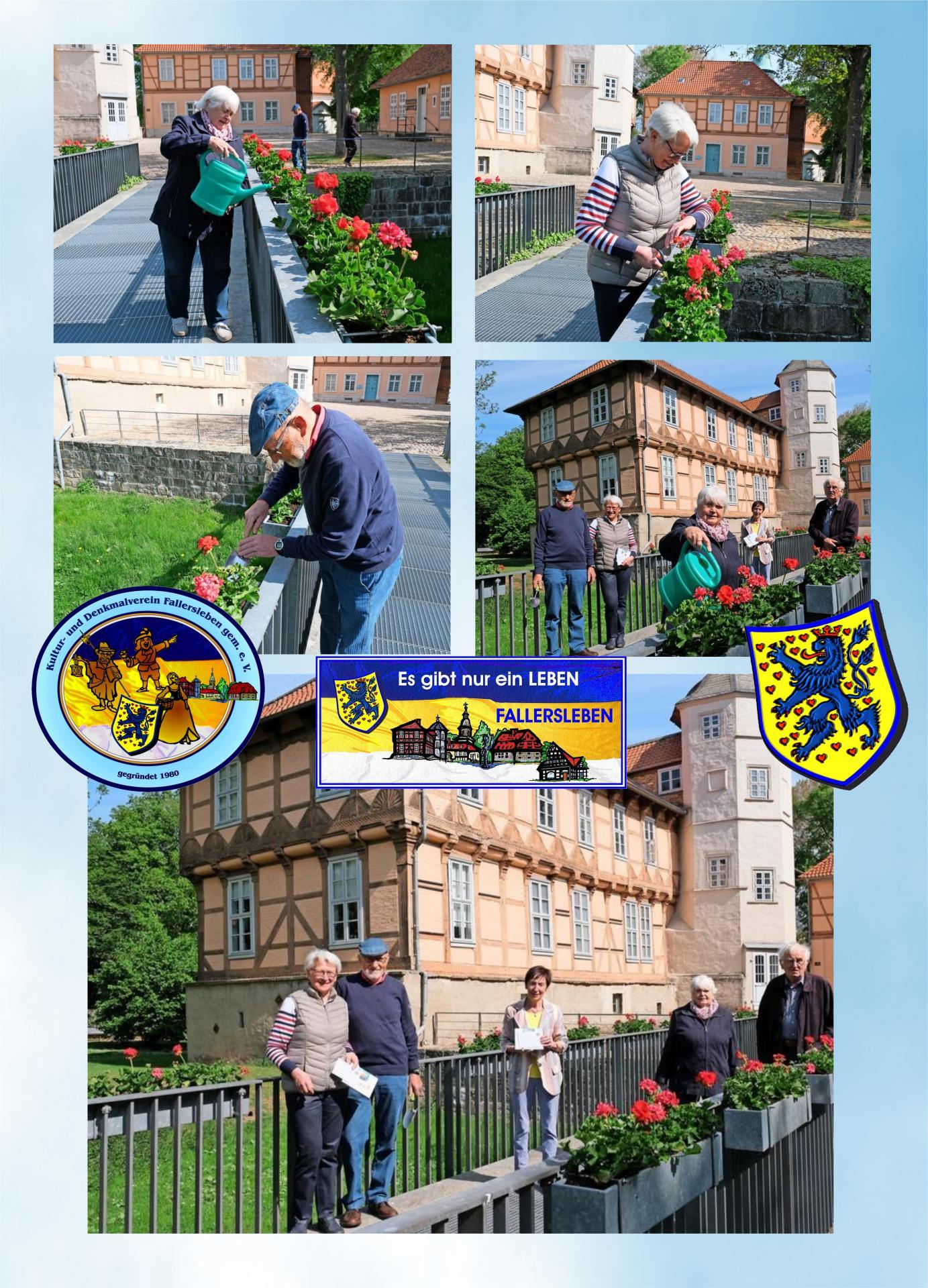 Blumenpflanzen Schlossbrücke Fallersleben