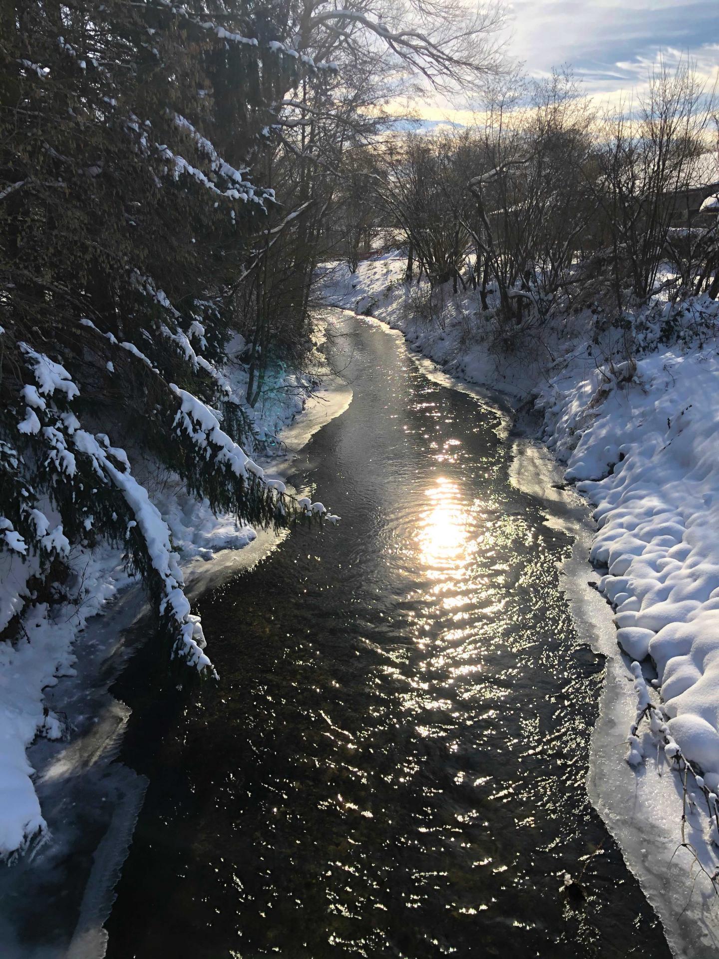 Lamme im Winter