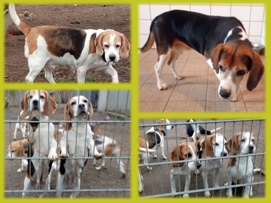 Spendenaufruf Beagle