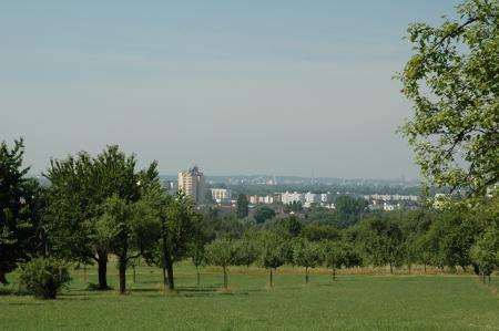 Bild zeigt die Streuobstwiesen und im Hintergrund die Stadt Maintal