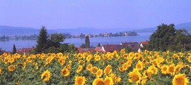 Blick von der Gnadenkirche auf den Gnadensee