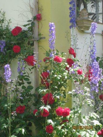 Blüten-Satyr.JPG