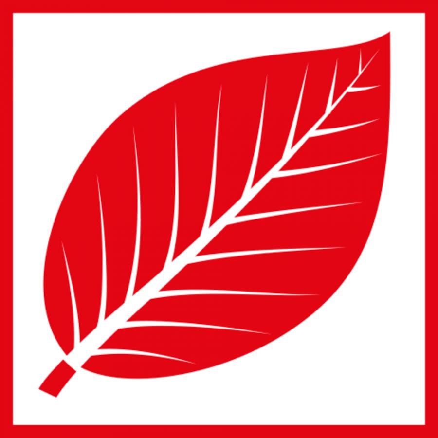rotes Buchenblatt