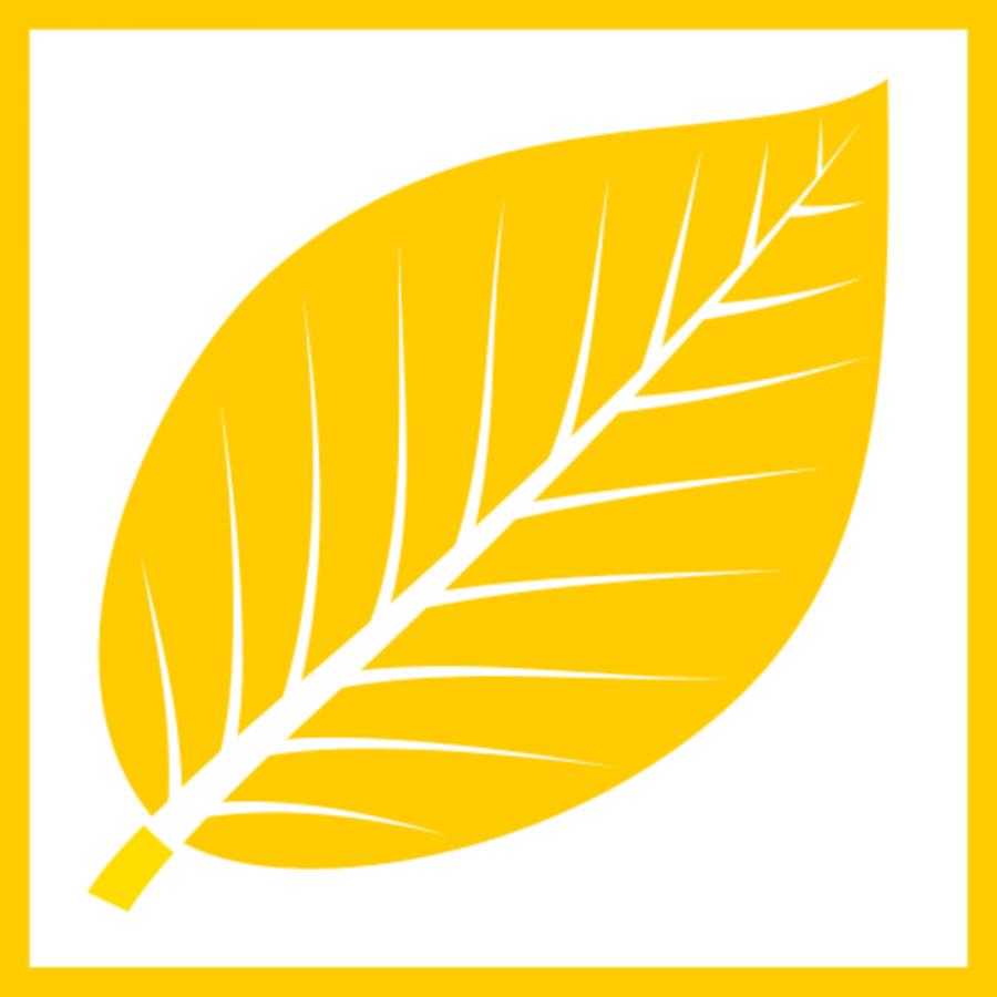 gelbes Buchenblatt