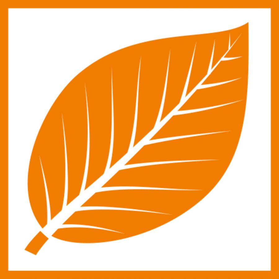 orangenes Buchenblatt