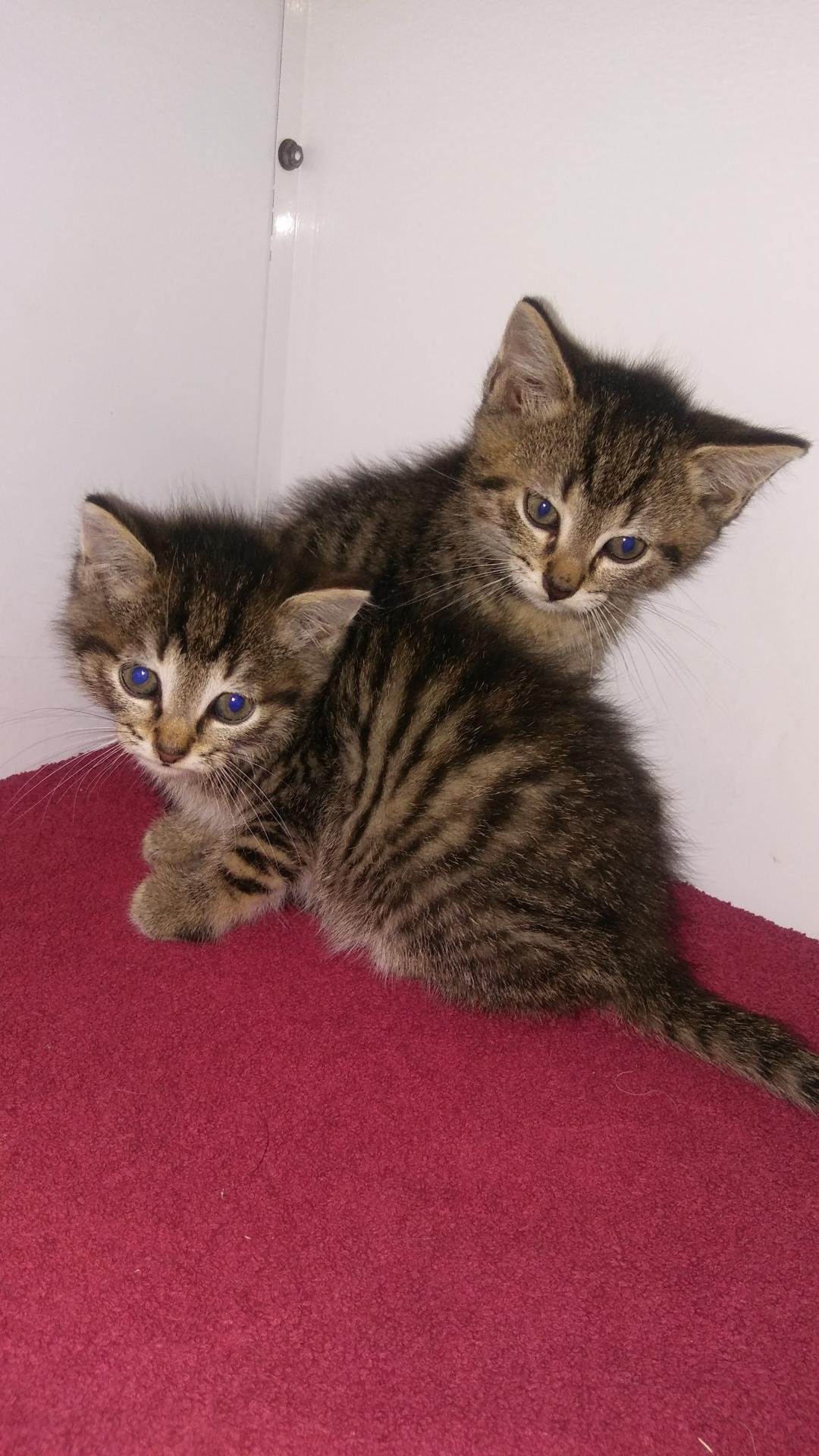 Katzenbaby 2