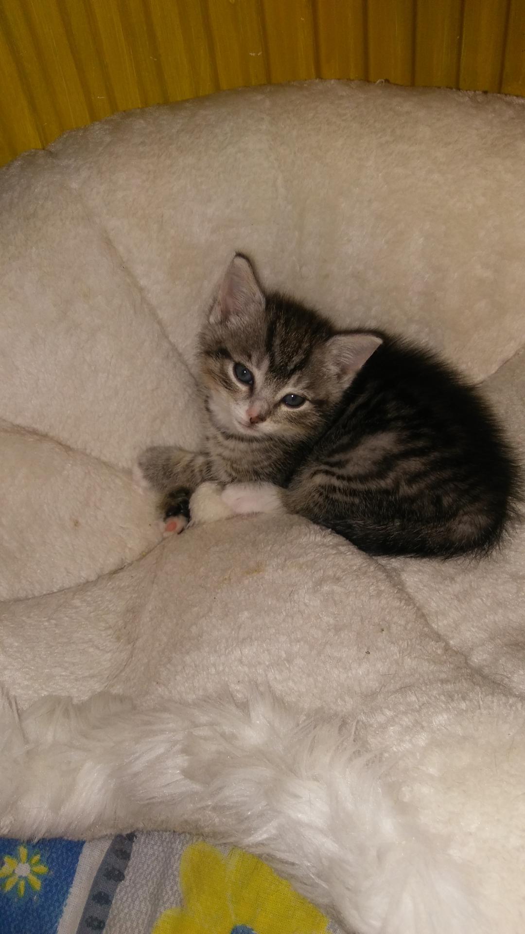 Katzenbaby 3