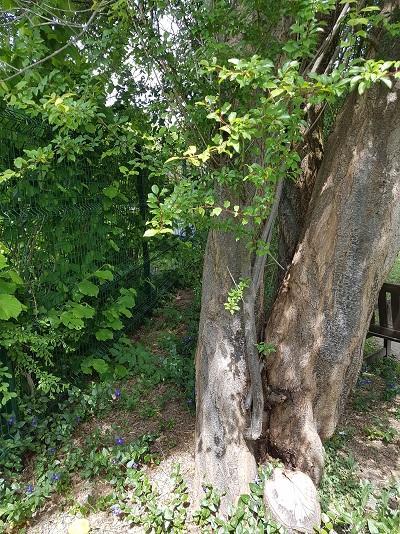 Baum wiederfinden