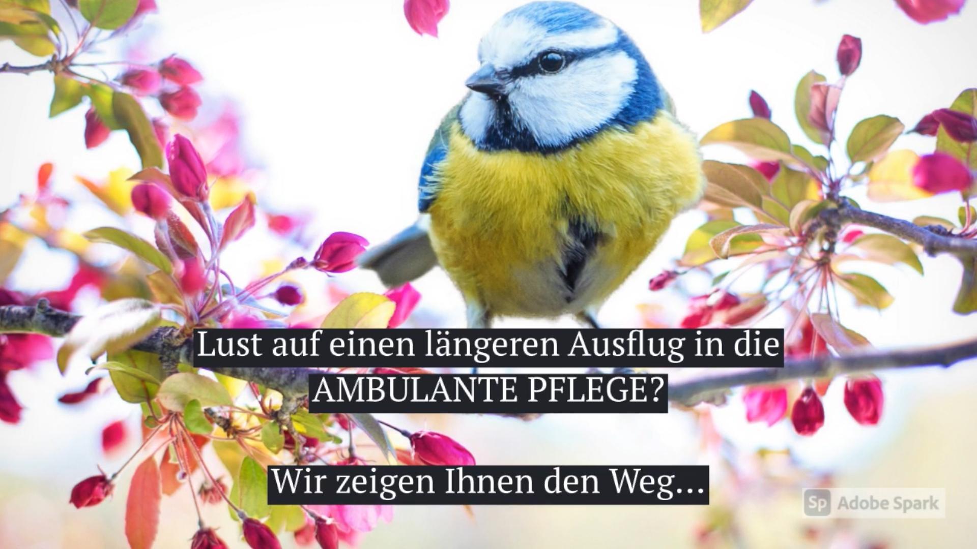 werbevideo_heinrich