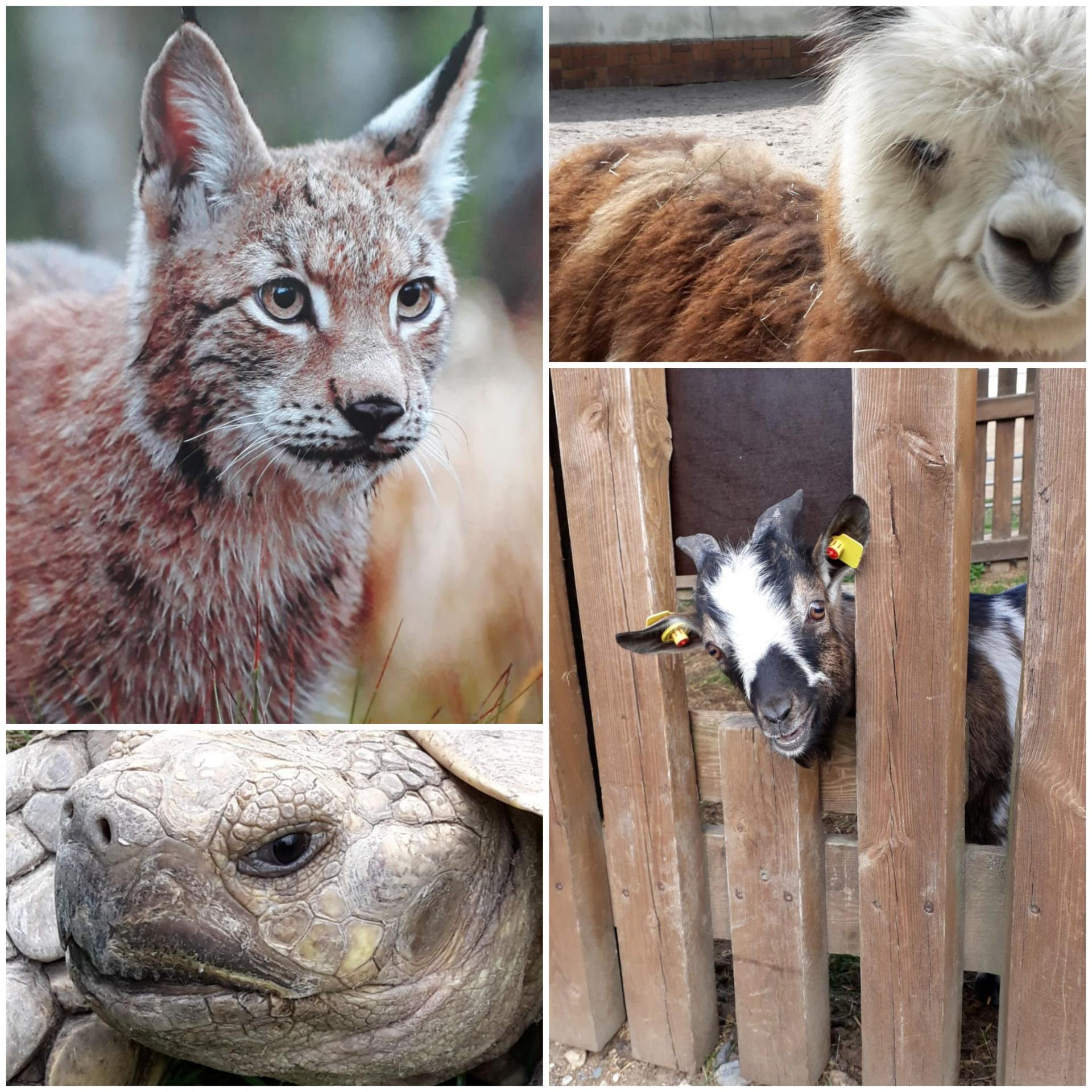 Tierparkbesuch