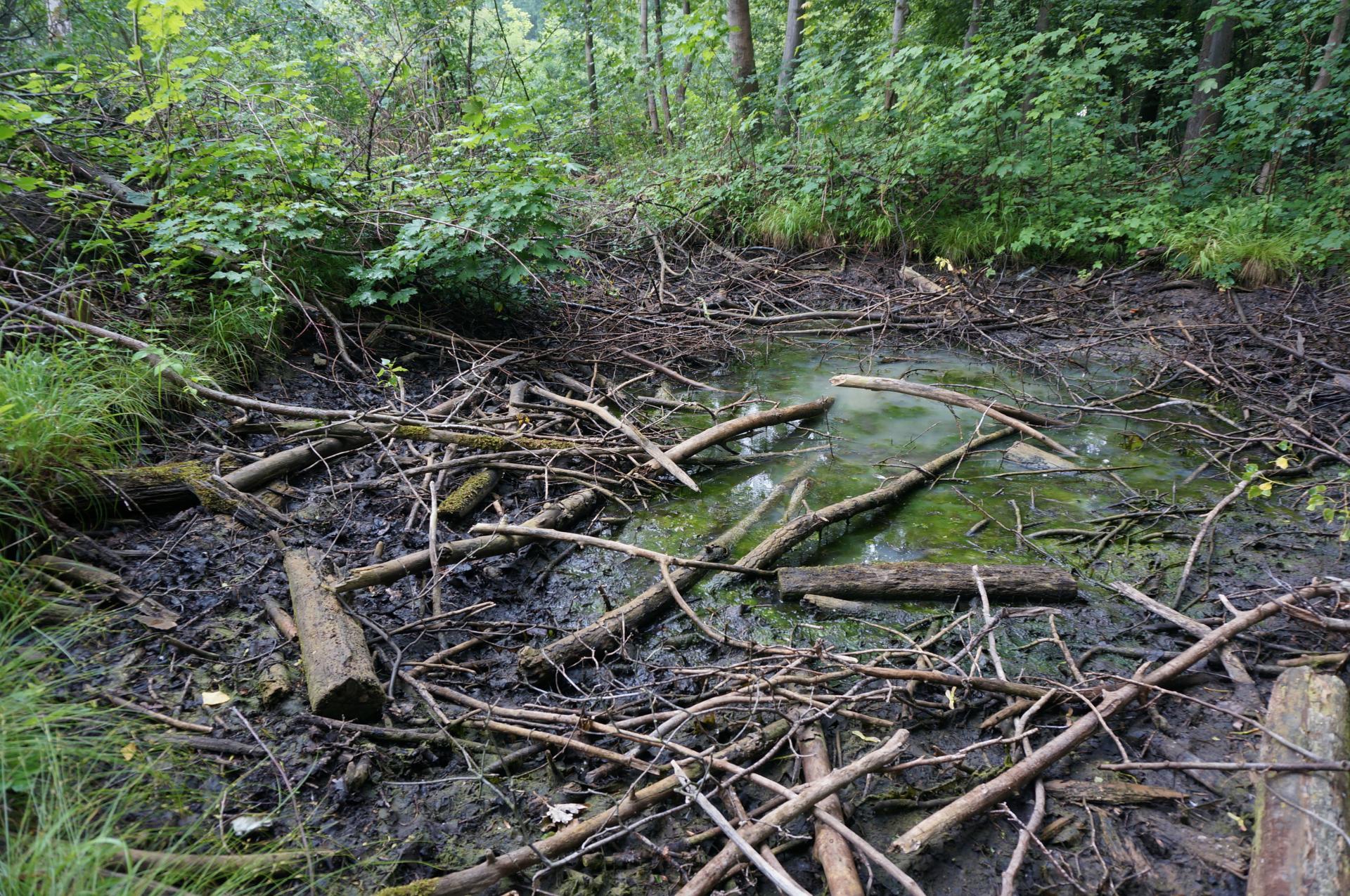 verlandete Kleinstgewässer