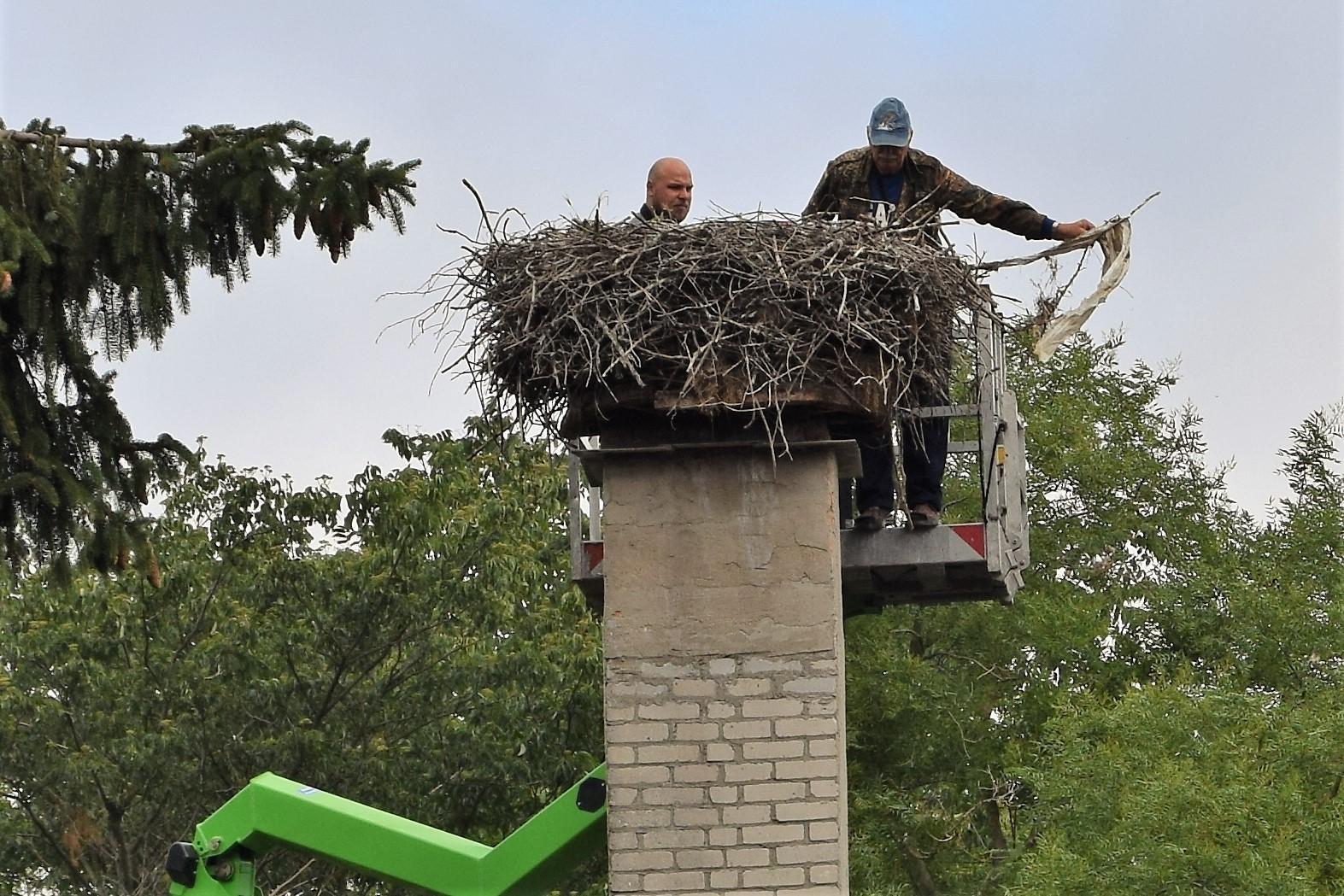 Kontrolle des Storchenhorstes