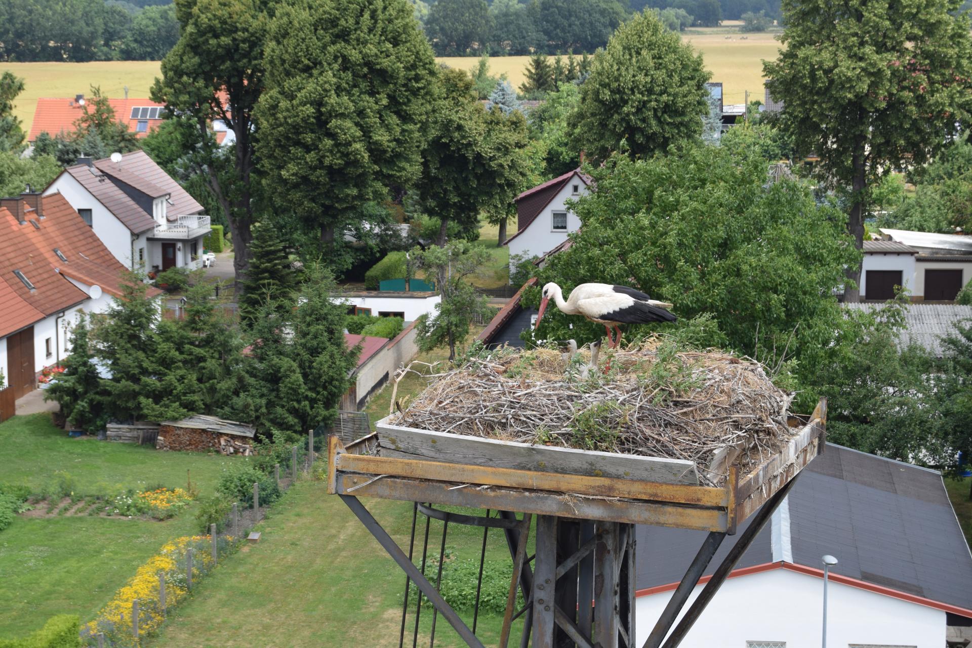 Weißstorchenhorst in Schnaditz