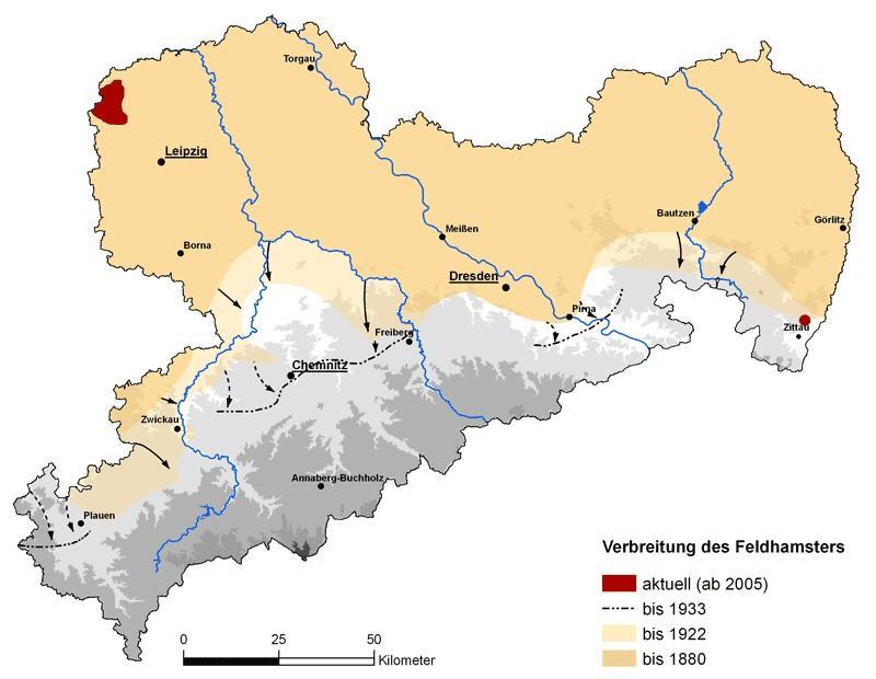 Verbreitung der Feldhamster in Sachsen (Karte: Zimmermann, LfULG (Hrsg., 2009)