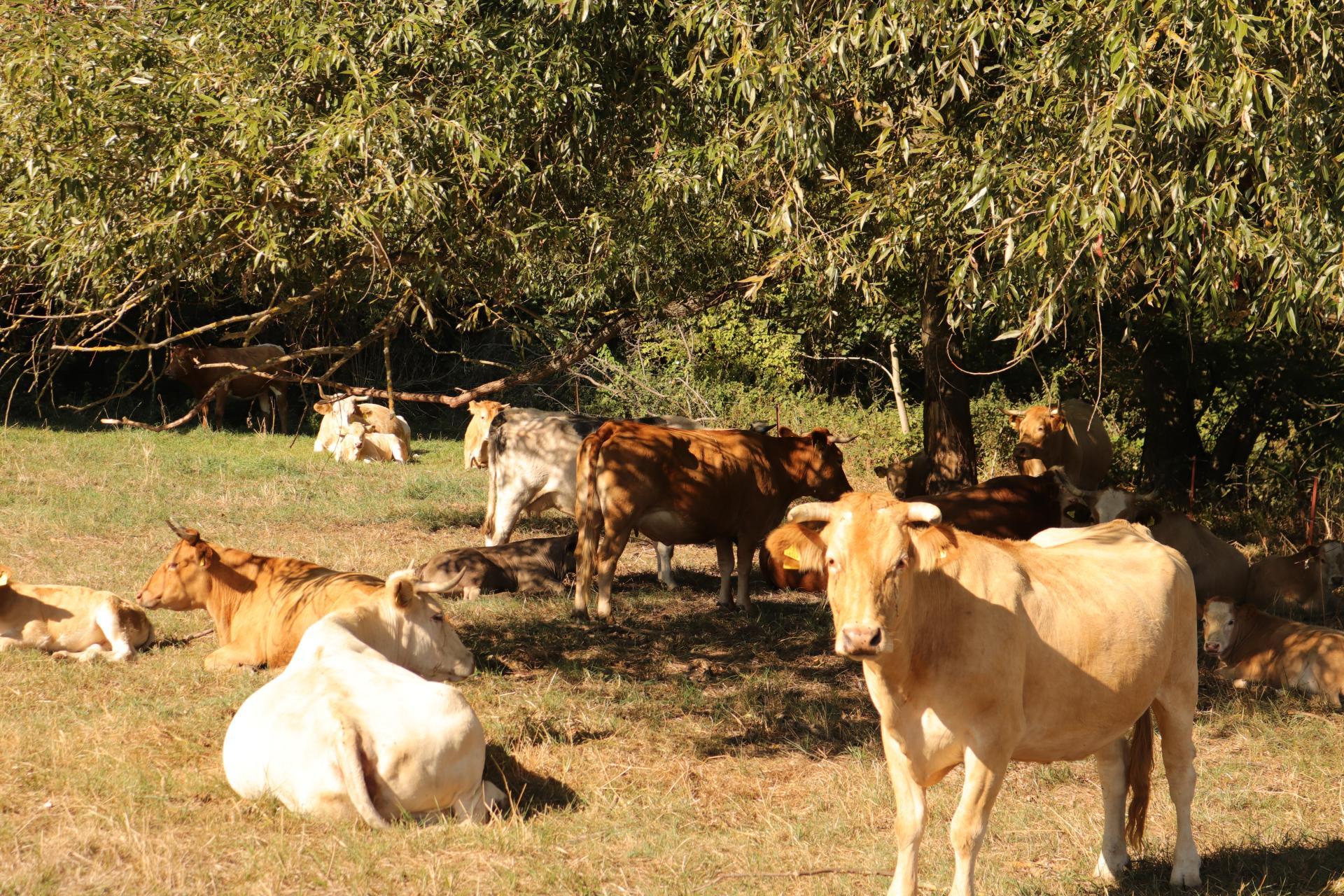 Viehweide
