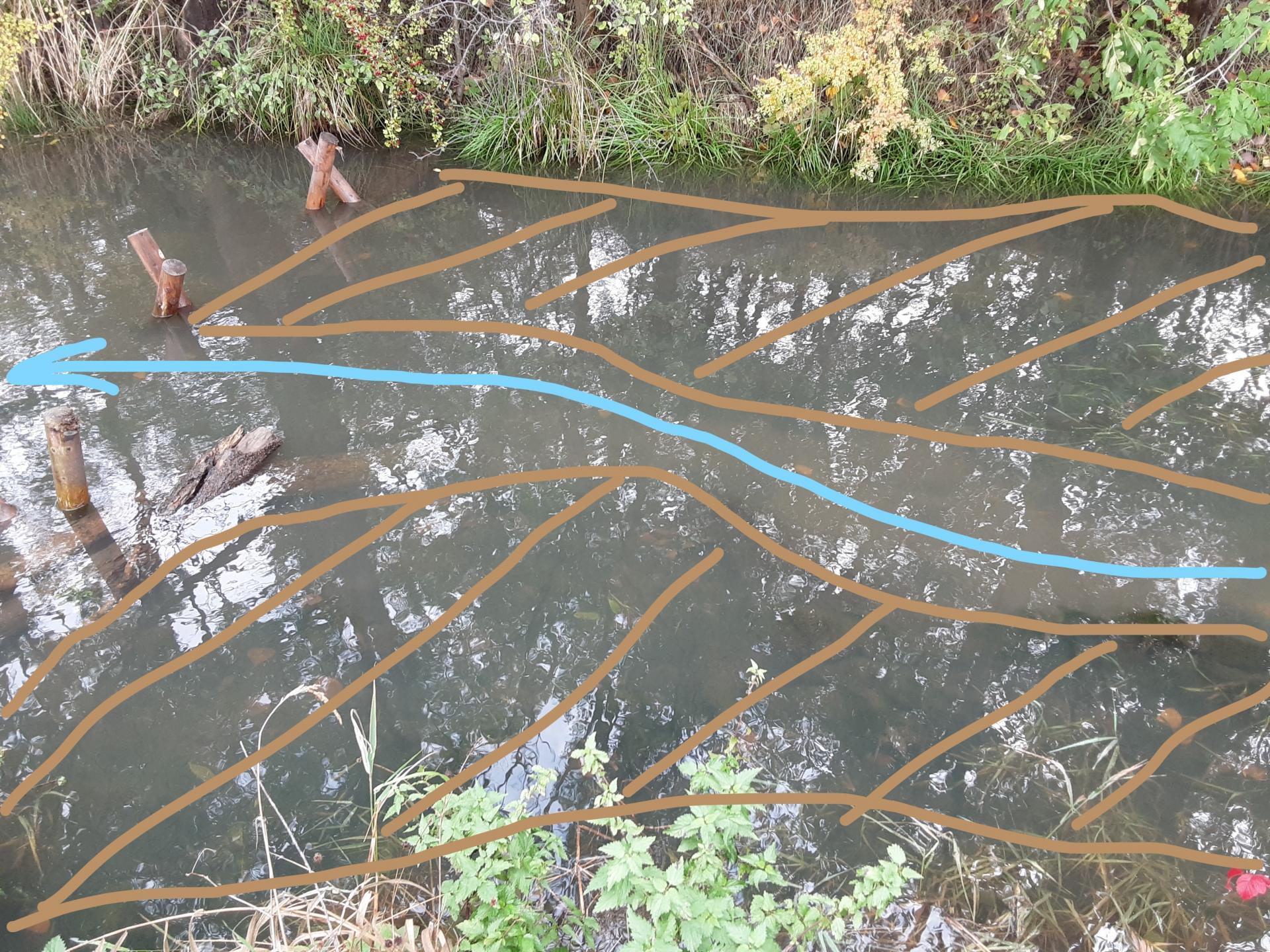 sich entwickelnde Strömungsdiversität am Gewässer
