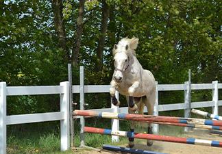 Pony springt