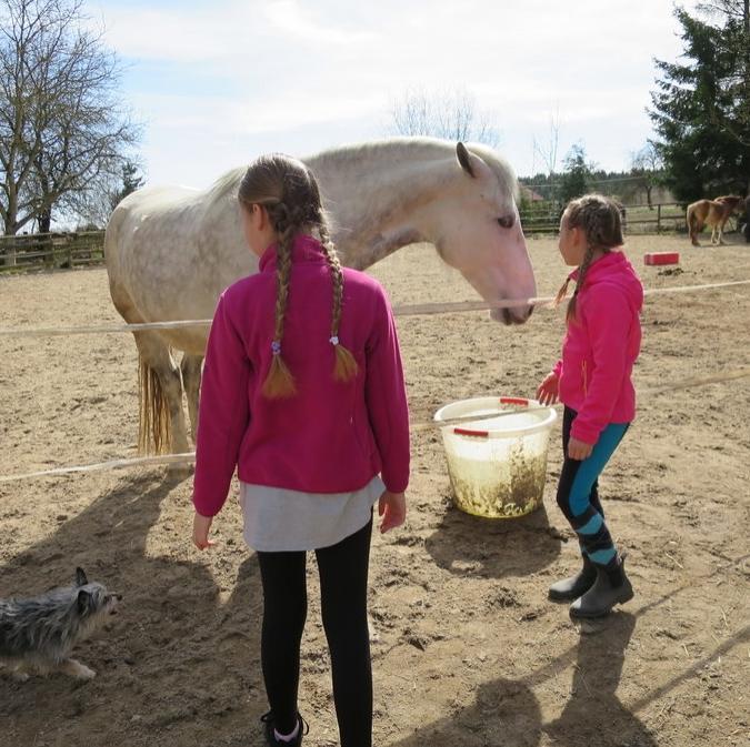 Pferdetage Scherneck