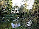 Schadebeuster Teich mit Hagebutten