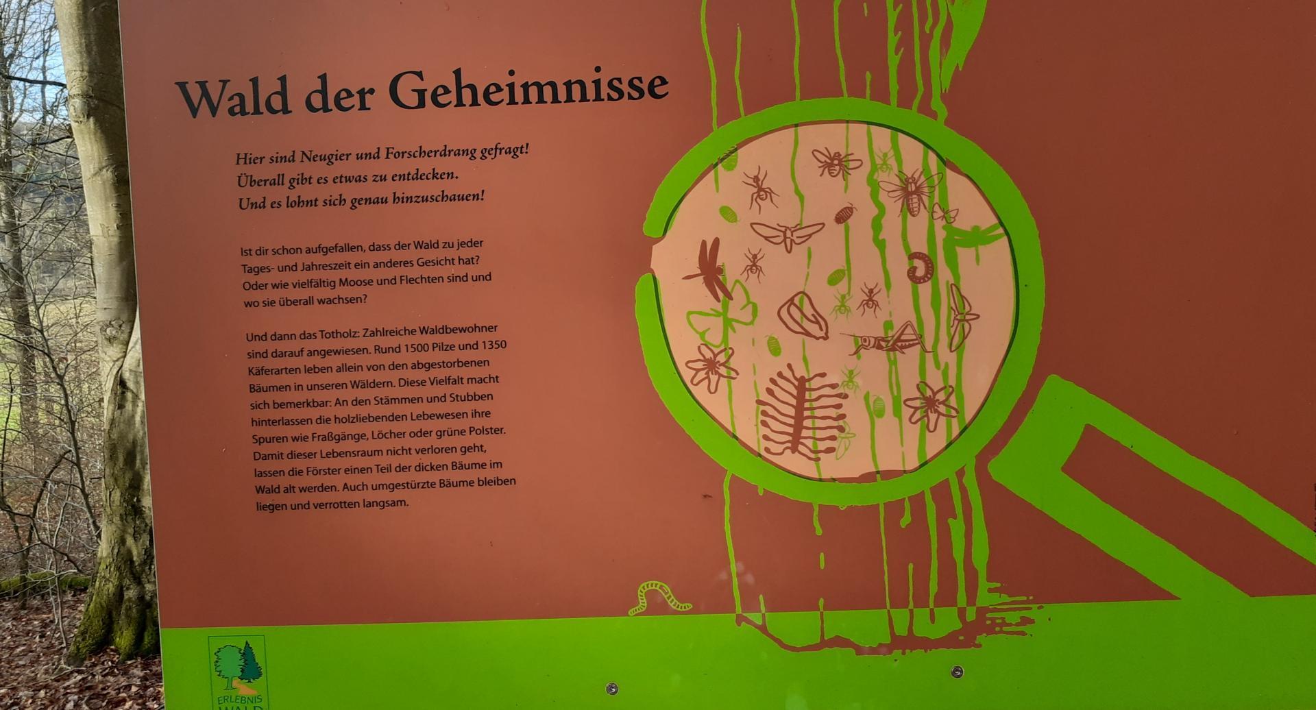 Waldgeheimnisse2