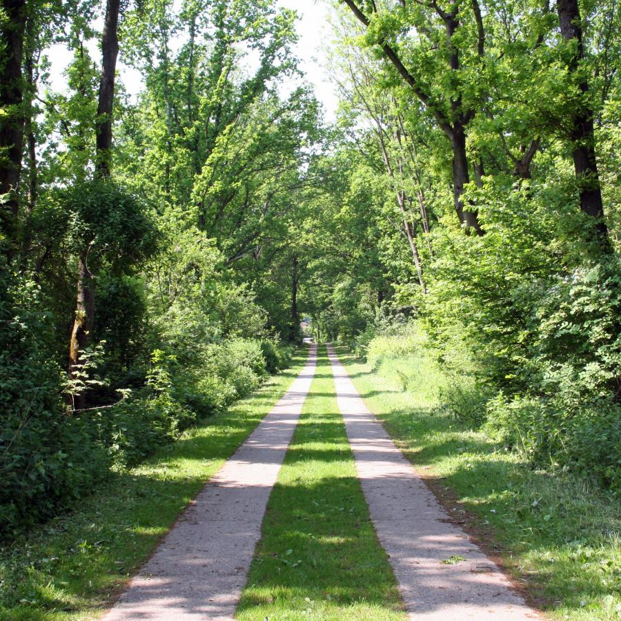 Alter Landweg