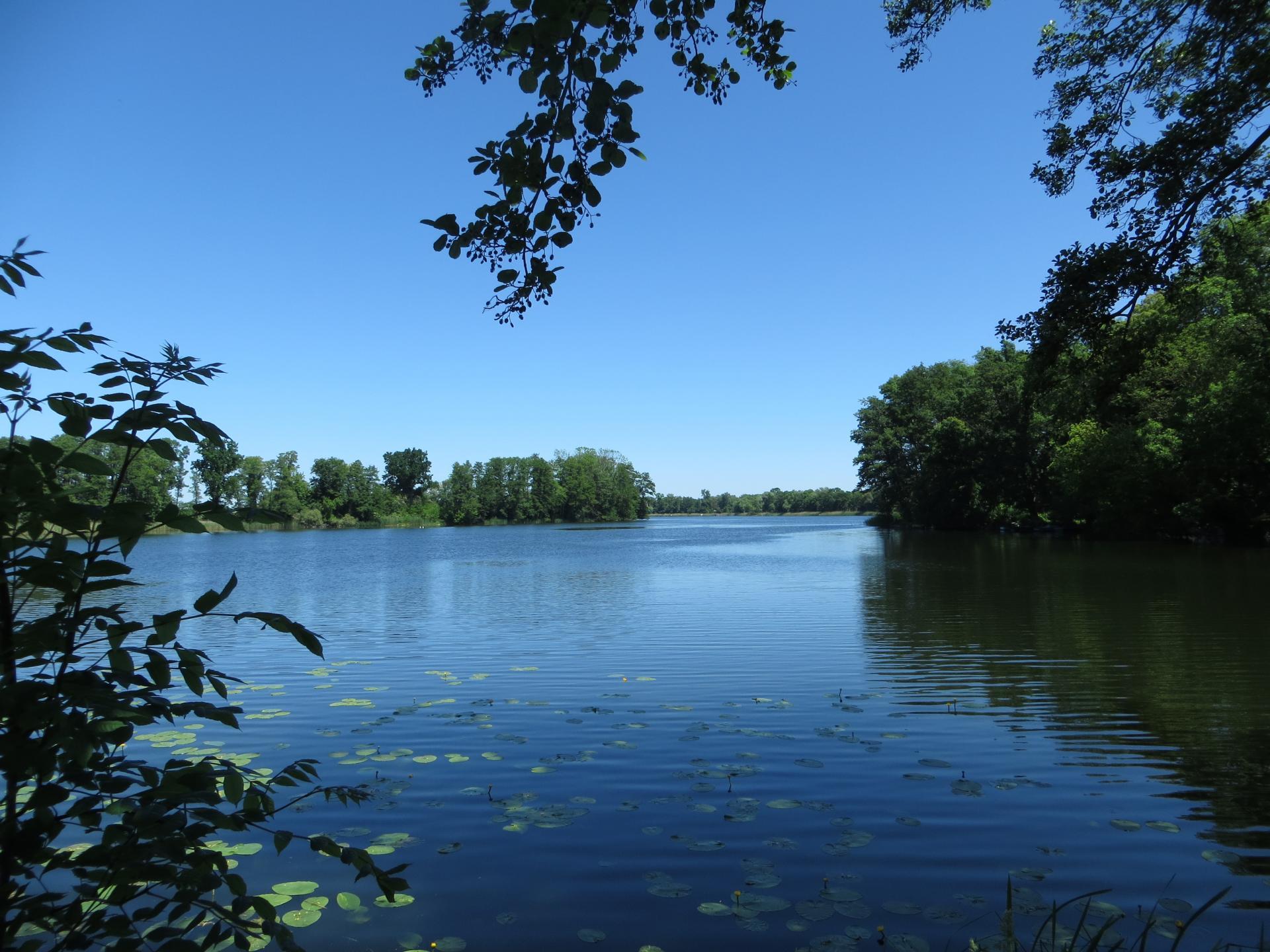 Hohenjesarschen See  Foto: Info Punkt Lebus