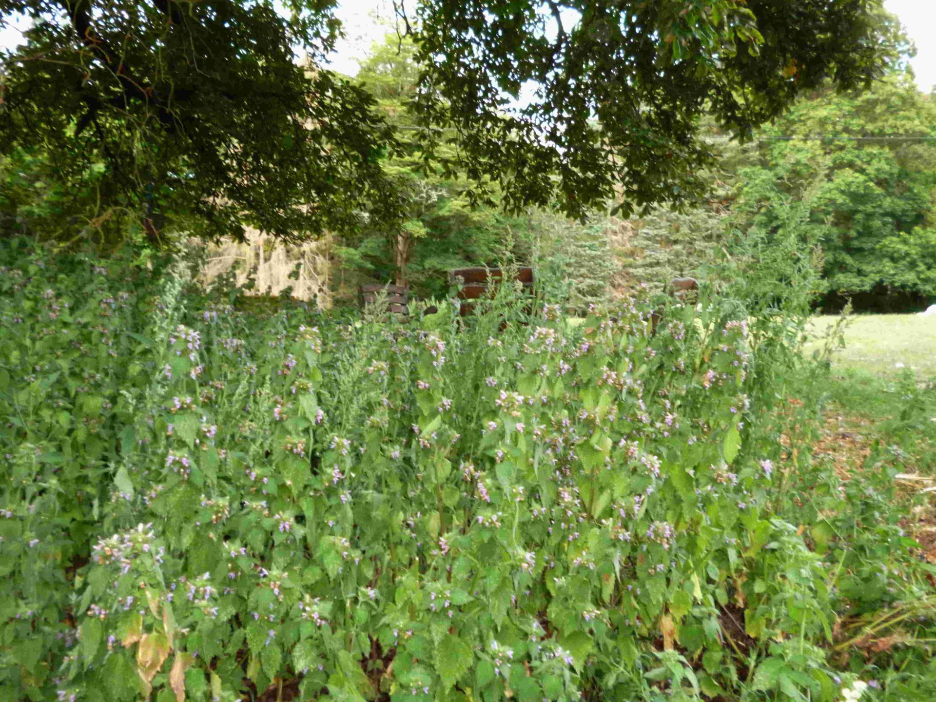 Pflanzenpracht Wabel 02