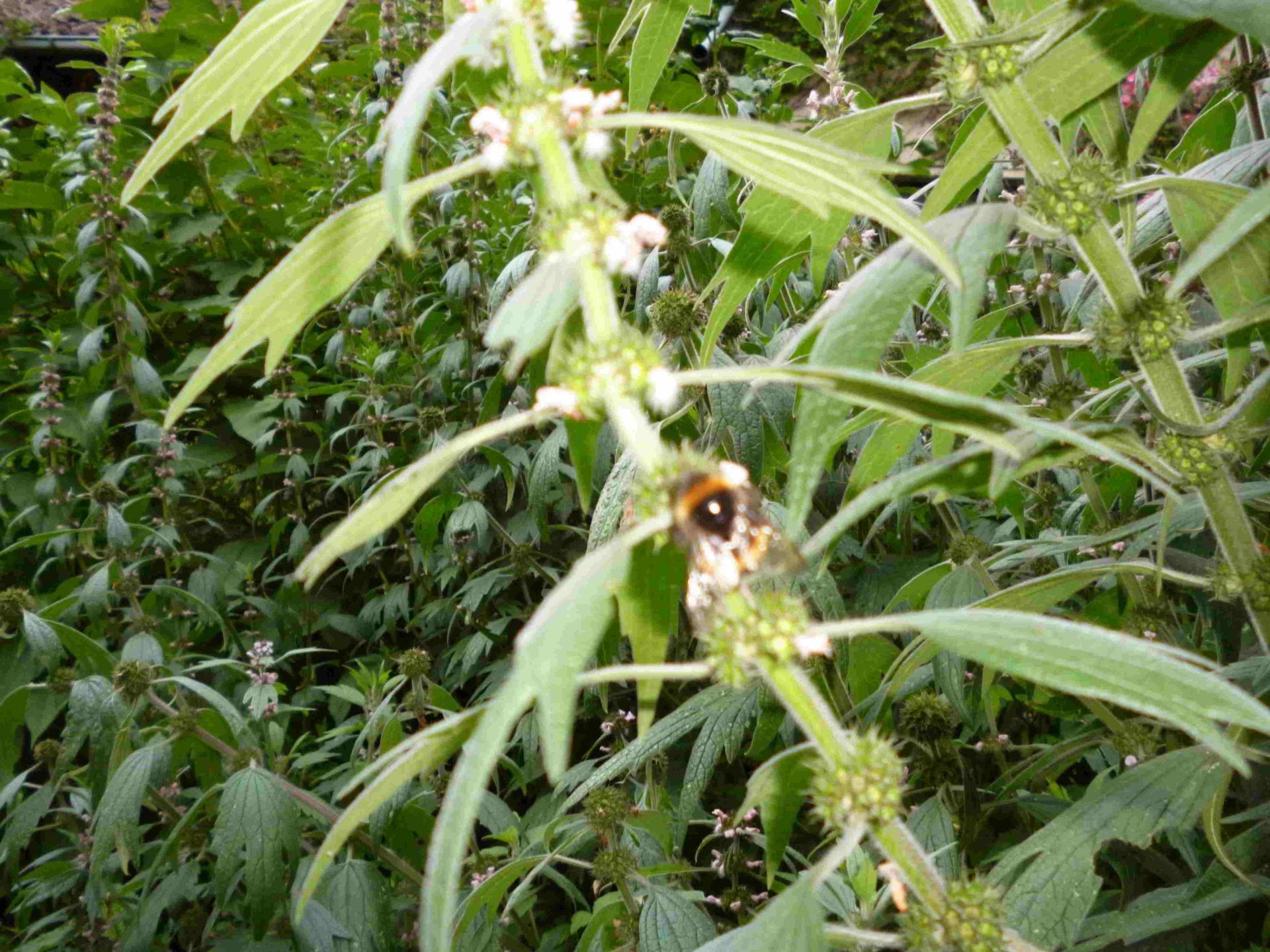 Pflanzenpracht Wabel 06
