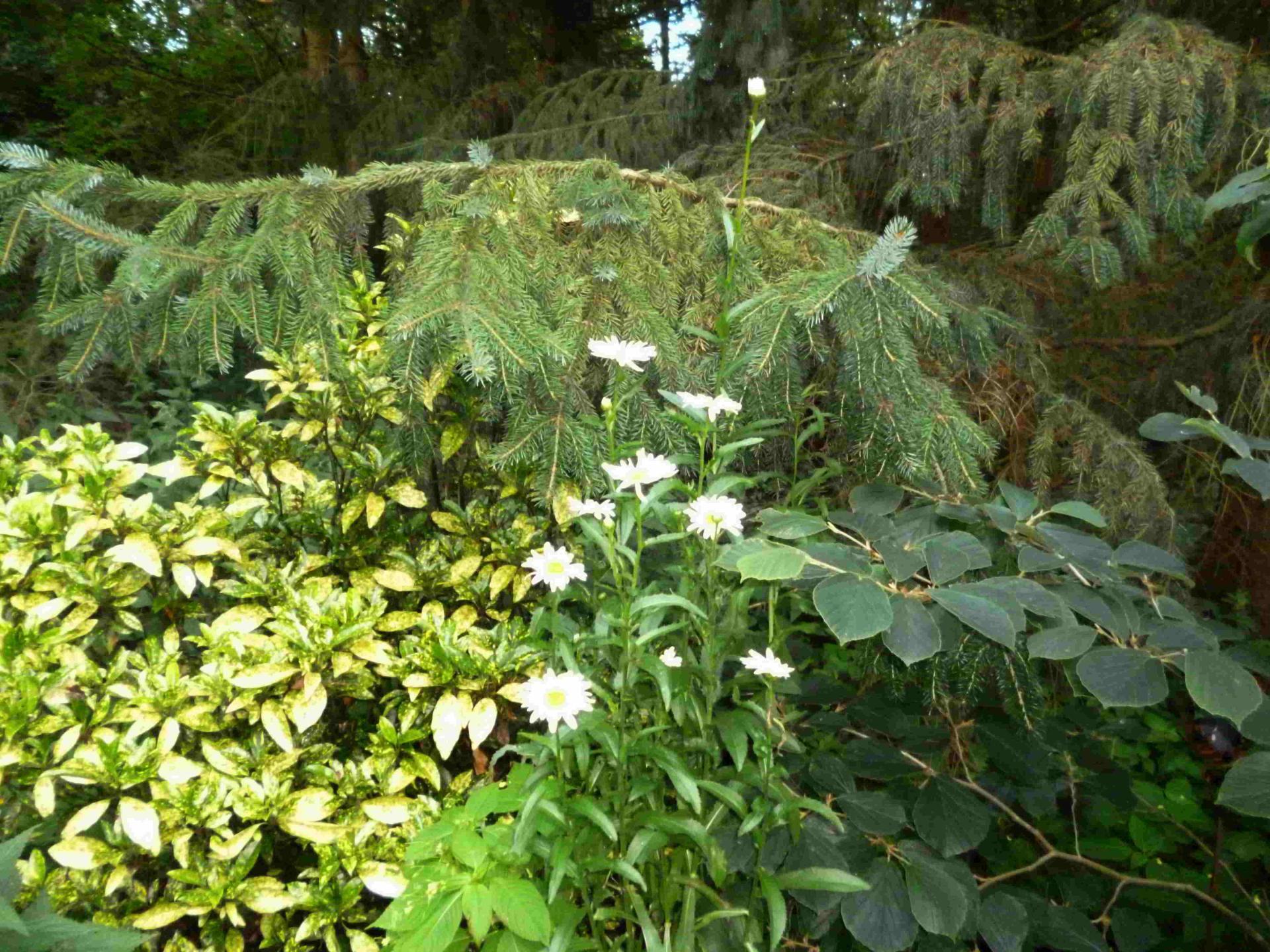 Pflanzenpracht Wabel 07