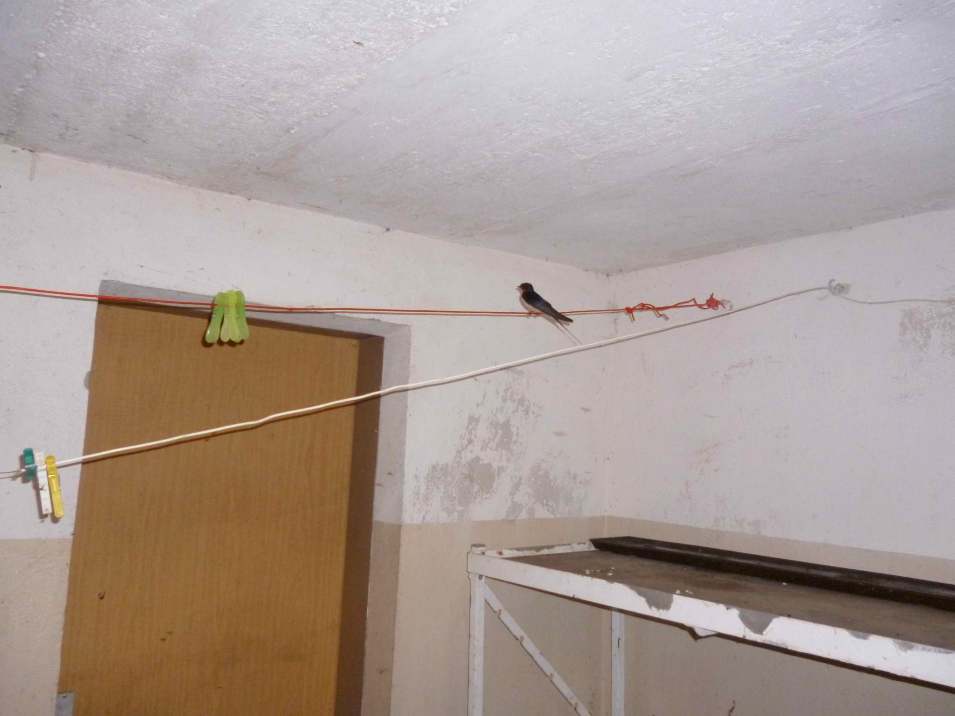 Vogelvater auf der Wäscheleine