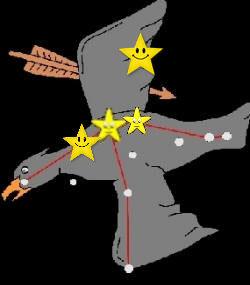 Adler mit Sternchen