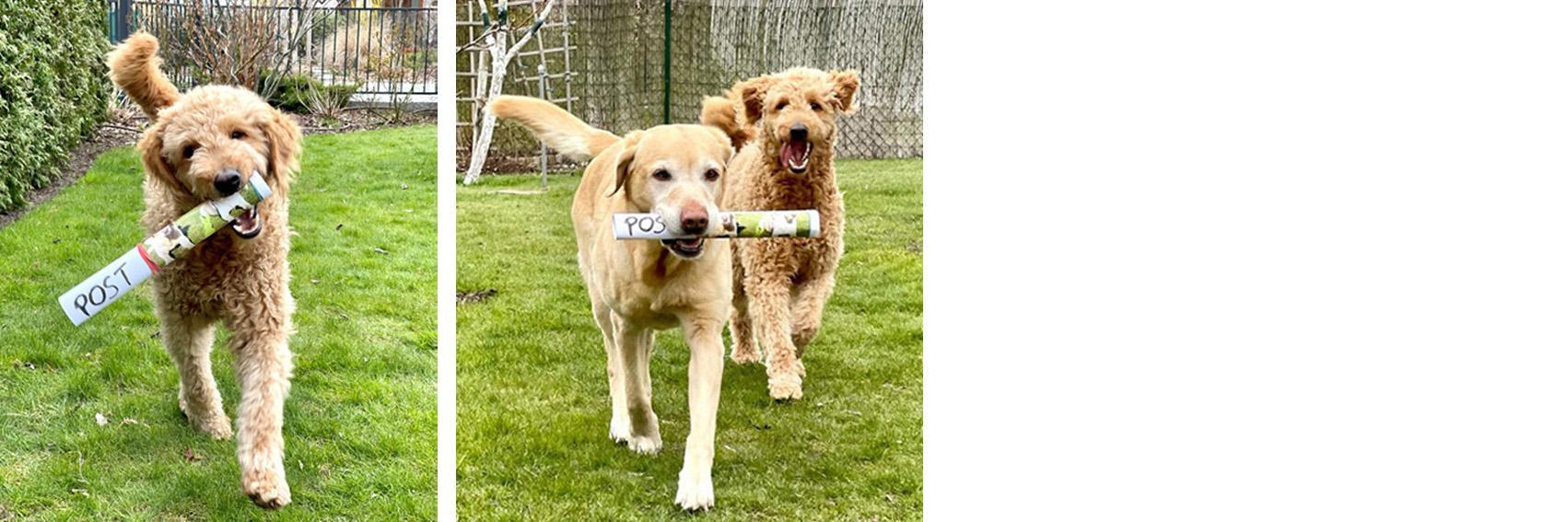 Banderole Posthunde