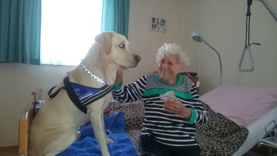 Hundebesuchsdienst1