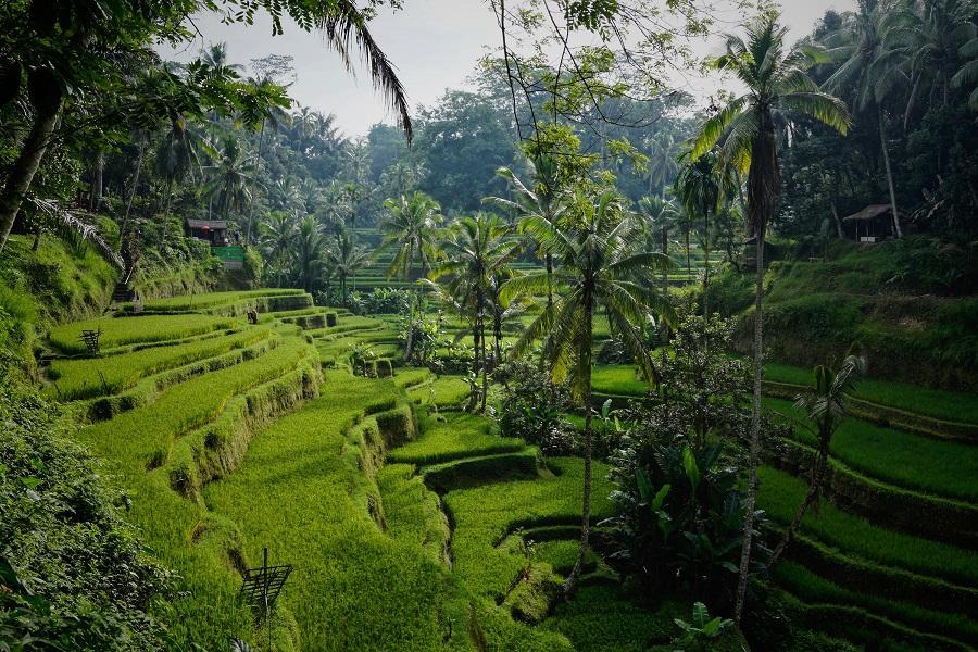 Bali_Reis_niklas-weiss--2WlTWZLnRc-unsplash_klein